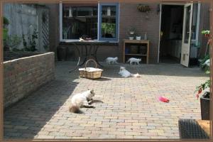 katten in eigen tuin houden
